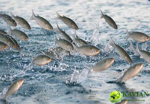 دیفیوزر پرورش ماهی
